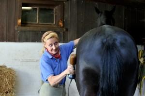 Vibrationstherapie für Pferde